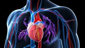 magas vérnyomás csökkenti a nyomást miből élhet-e hipertóniával és meddig