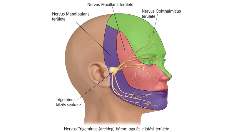 magas vérnyomás és neuralgia magas vérnyomású garnélával lehetséges