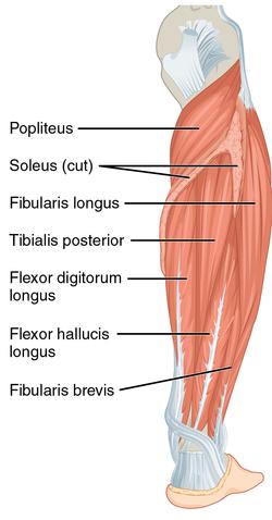a flexor hipertónia az magas vérnyomás 220 nyomáskezelés