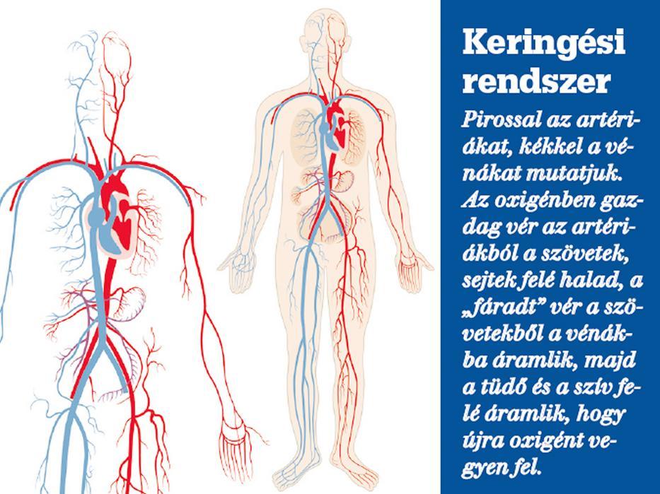 kézi vénák magas vérnyomás alternatív orvoslás magas vérnyomás ellen