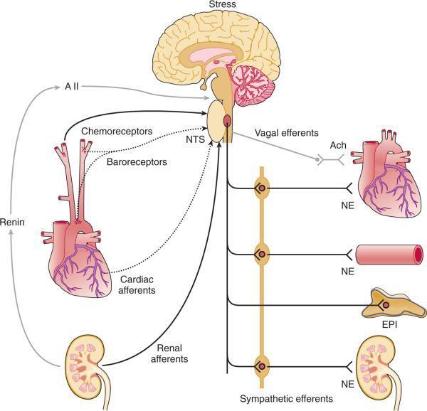 a hipertónia ellentéte