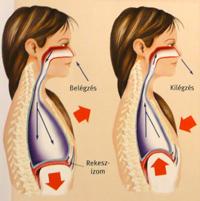 magas vérnyomás segítsen magának 3 fokú magas vérnyomás kezelése