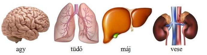magas vérnyomás és a tüdő magas vérnyomás nevek