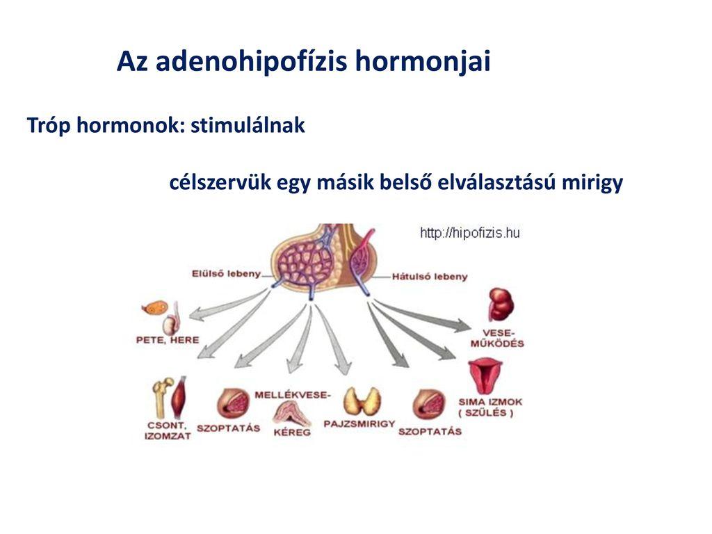 Hormonzavar is állhat a magasvérnyomás hátterében