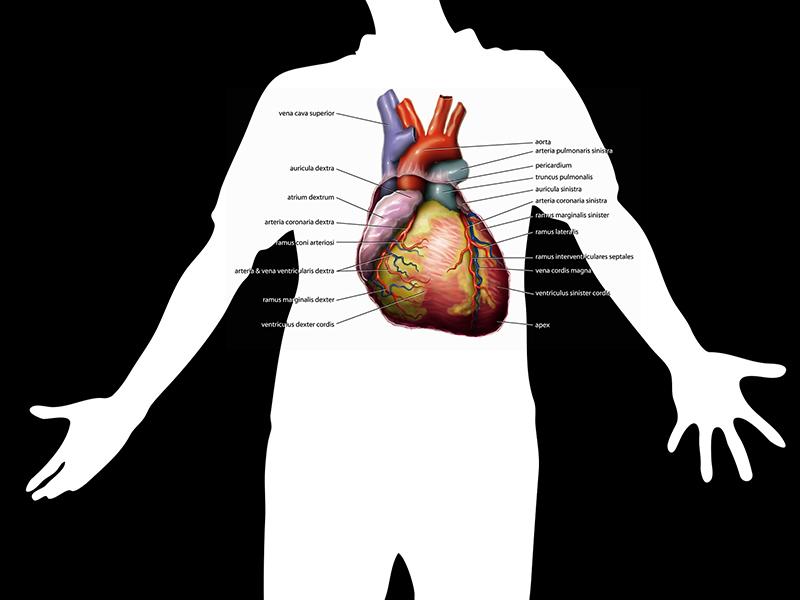 artériák hipertónia