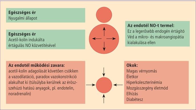 a hipertónia kialakulásának oka magas vérnyomás az időjárás változásától
