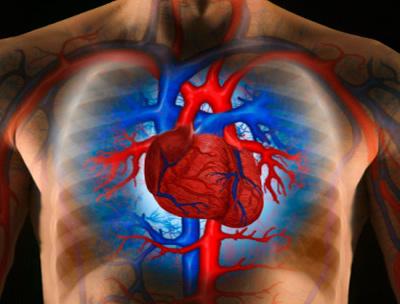 magas vérnyomás a szív hallgatózása