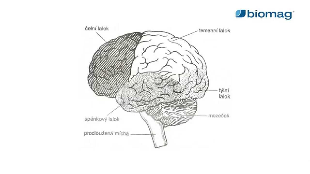 a hipertónia okát keresi a magas vérnyomás érrendszeri szövődményei