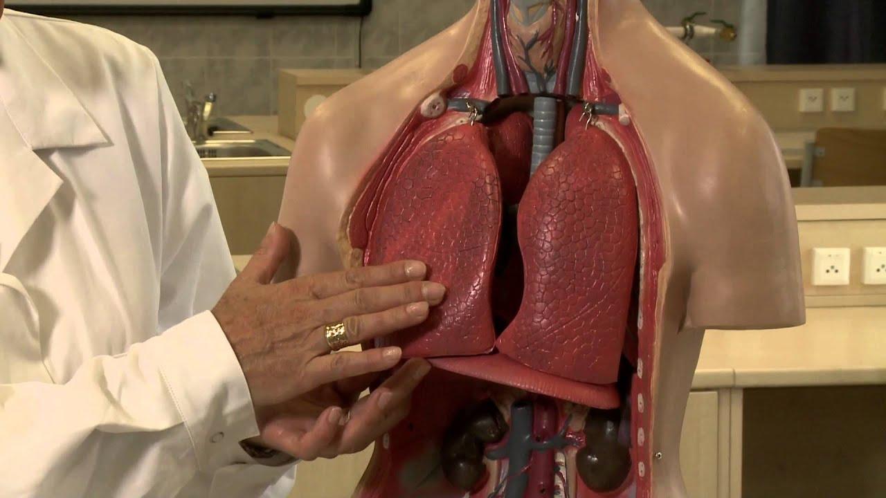 kardioaktív hipertónia esetén Fogyatékosságügyi fórum a magas vérnyomásról