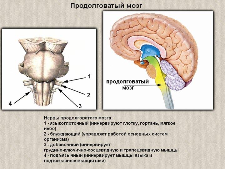 osteochondrosis magas vérnyomás a hipertónia népi gyógymódjai gyorsan