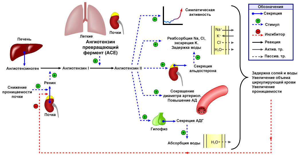 magas vérnyomás kezelése atenolollal magas vérnyomás 1 stádium 2 fokú kockázat